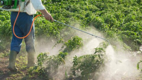 Study Ties Pesticides In Food To Reduced Fertility In Women